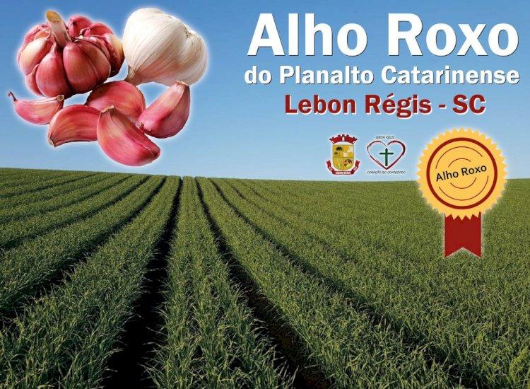 MUNICÍPIOS DA REGIÃO DEFINEM NOME E INDICAÇÃO GEOGRÁFICA AO ALHO ROXO DO PLANALTO CATARINENSE